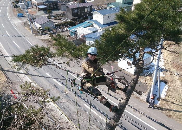 道路上にせり出した高木の特殊伐採