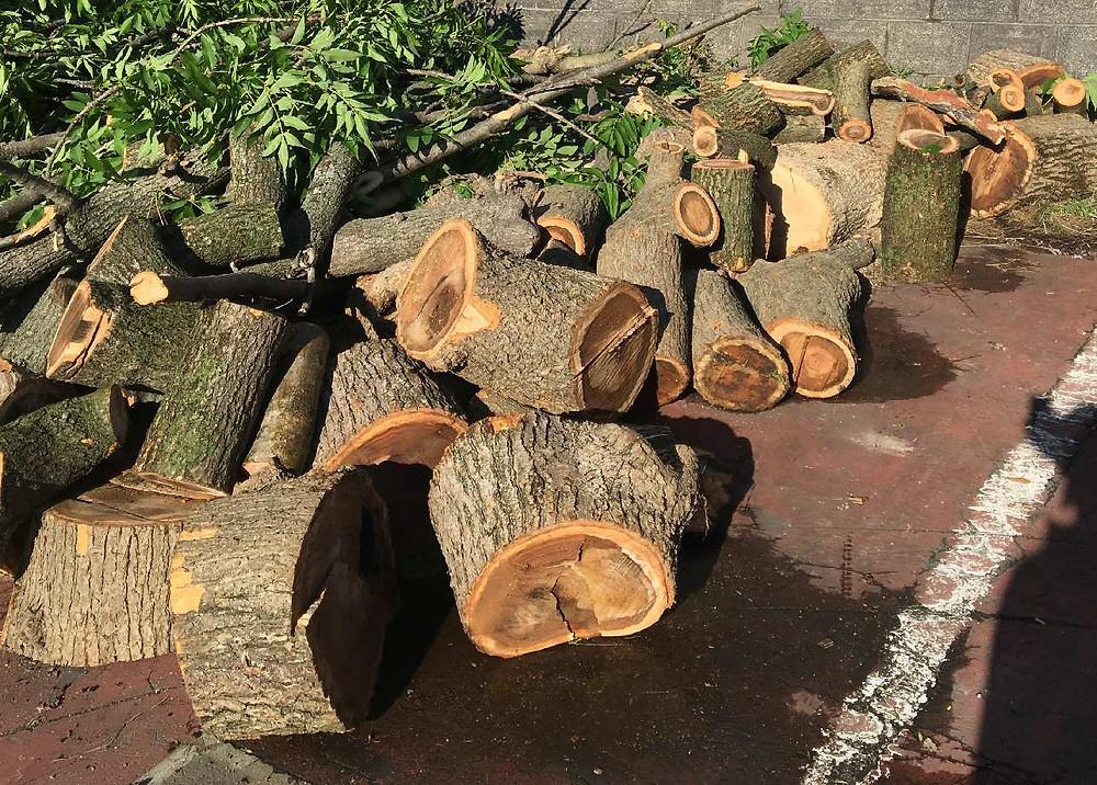 玉切りした大量の伐採木