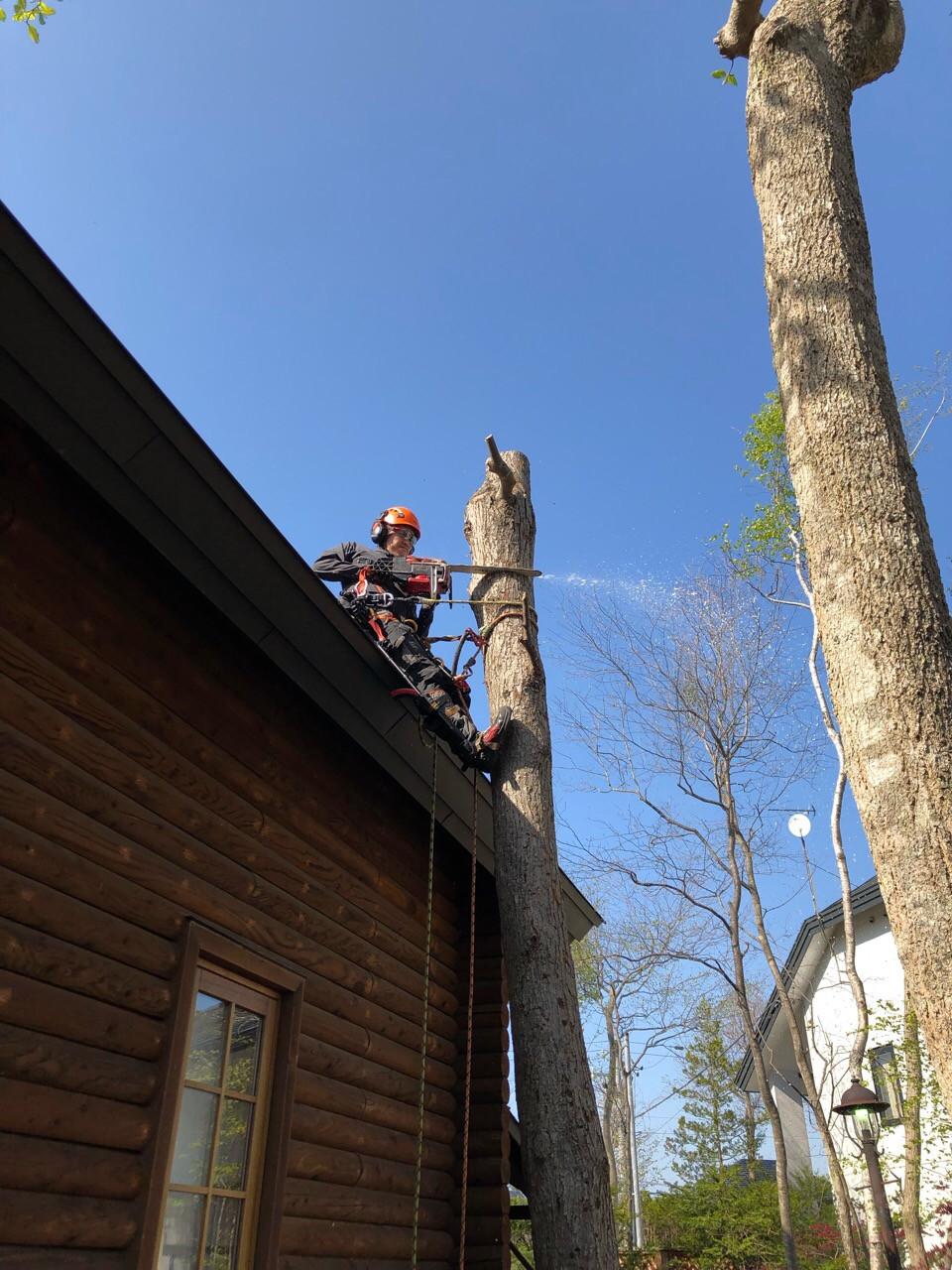 屋根にくっつきそうな生え方の木を伐採