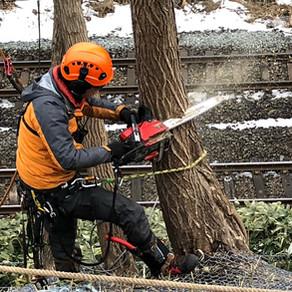 事例 線路上に伸びた危険木の特殊伐採 JR北海道様関連現場