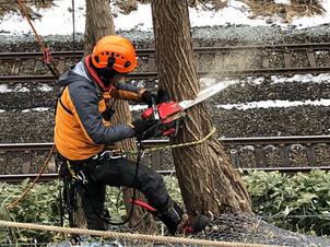 事例|線路上に伸びた危険木の特殊伐採|JR北海道様関連現場
