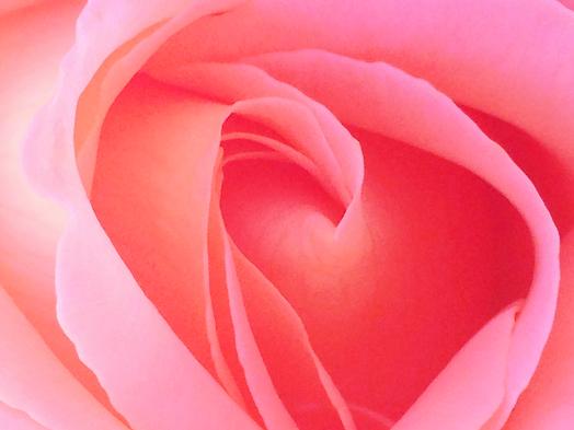 close-up-of-a-rose_t20_d1jgQb_edited_edi