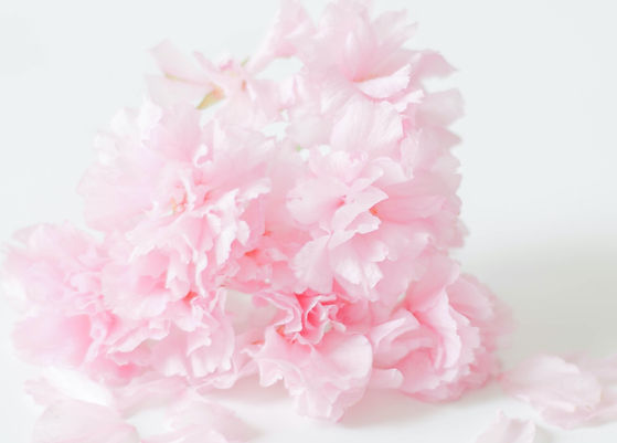 a-simple-and-soft-pink-flower-bouquet-co