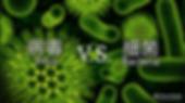 Virus vs Bacteria (Main).PNG