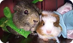 Sonja & Maizy