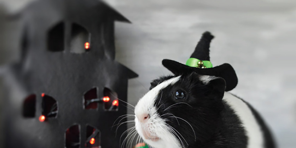 Maplebrook Pet Care Center's 10th Annual Halloween Open House