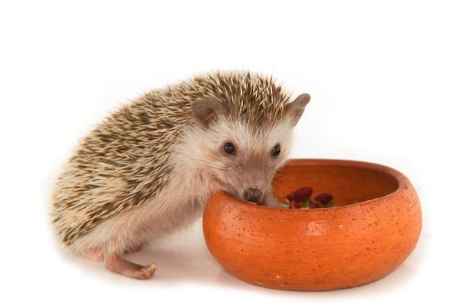 Salmonella in Small Animals