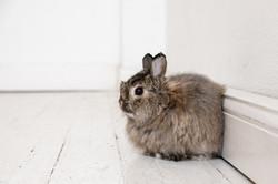 Bunny Sanders
