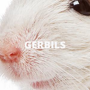 GERBILS