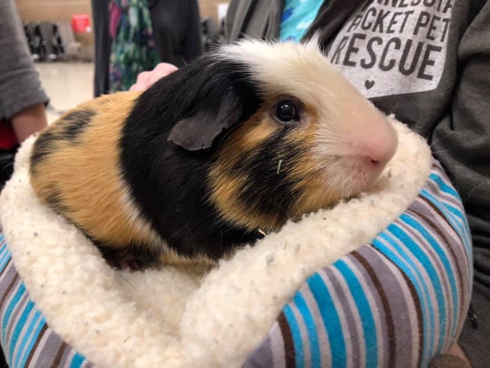 Kiss a pig event