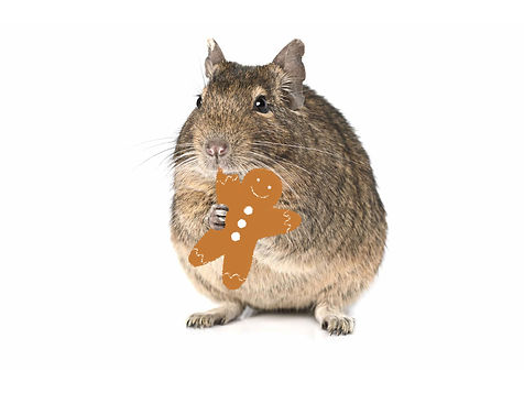 Degu-cookie.jpg