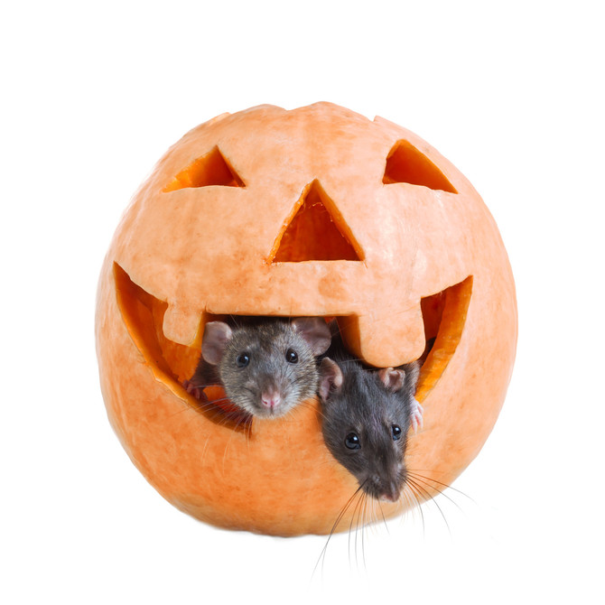 The Spooky Truth of Pocket Pet Safety During Halloween