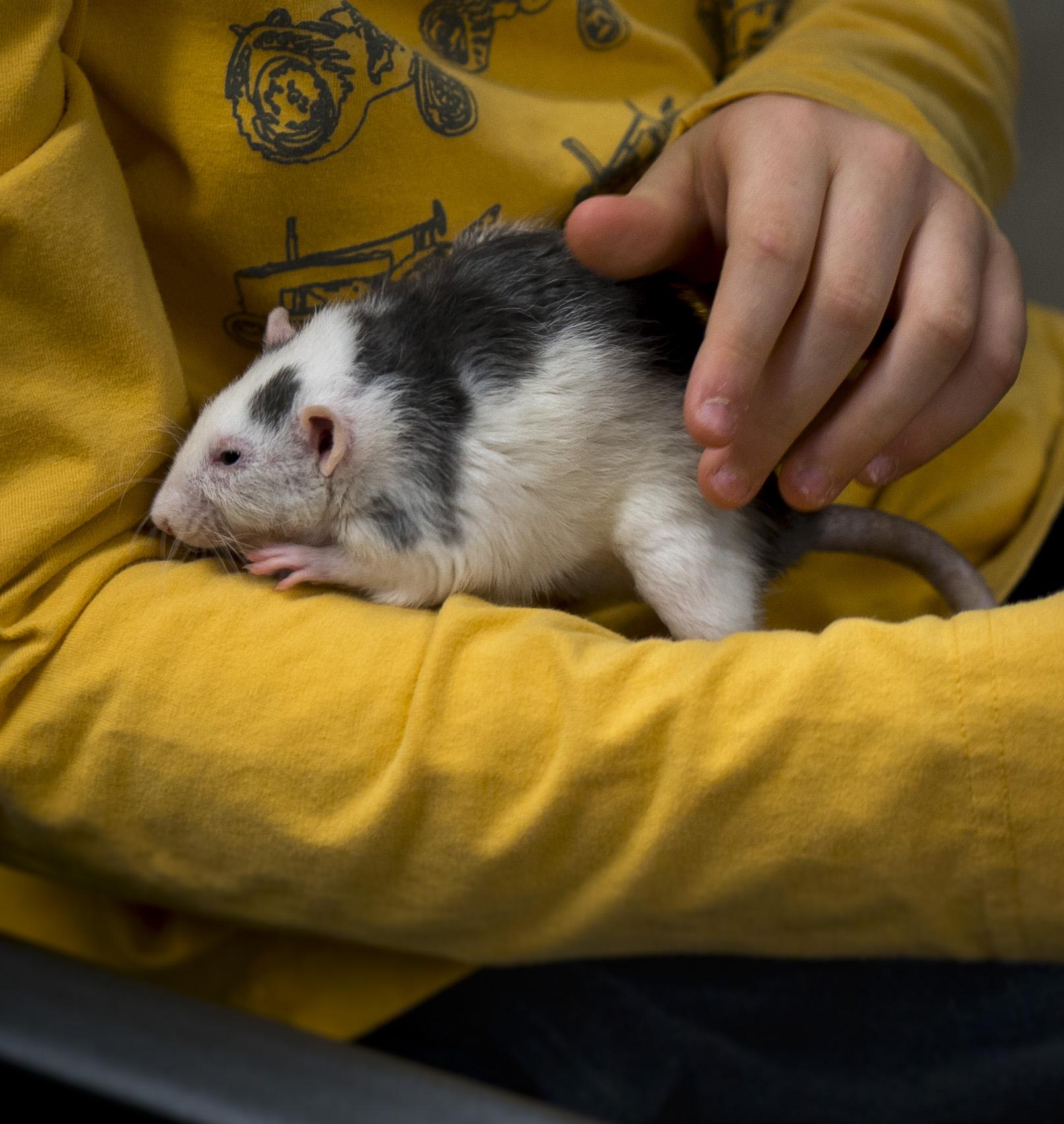 Pocket Pets 101