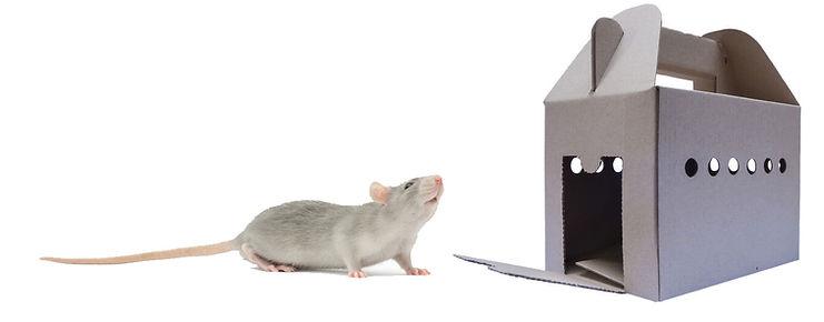 transport-box-rat.jpg