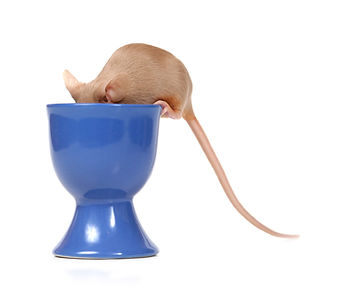 mouse face in cup.jpg