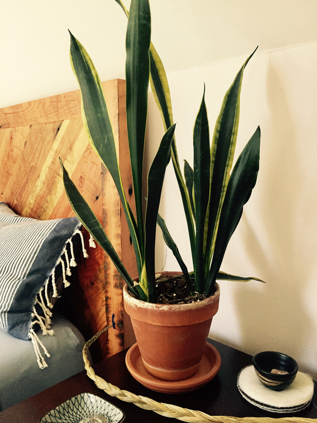 PURIFY THE AIR IN YOUR HOME/OFFICE WITH PLANTS