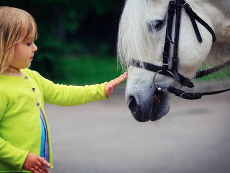A Bond Like No Other: Horses And The Power To Change Lives