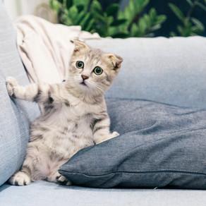 Meditation and Kittens