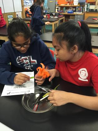Science at SCL School Glenview