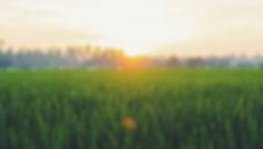 photo-grass.jpg