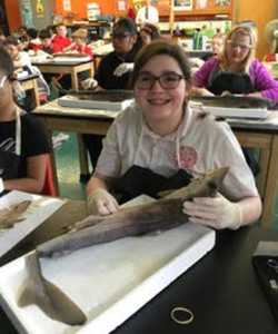 Dissecting a shark at SCL School