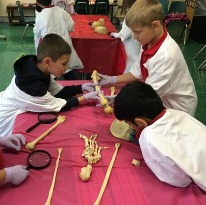 Skeletons at SCL School Glenview