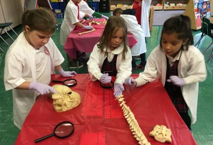 Skeletons at SCL School