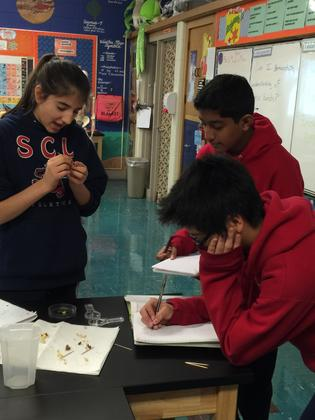 Science in action at SCL School