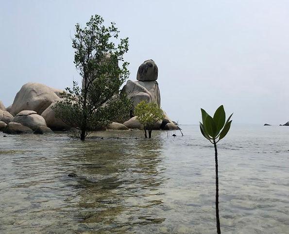 mangrovw.jpeg