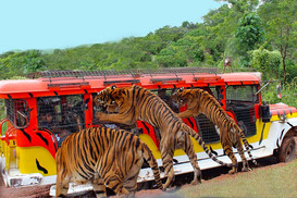 Zoobic Safari