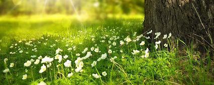 spring-276014_1920 1.jpg