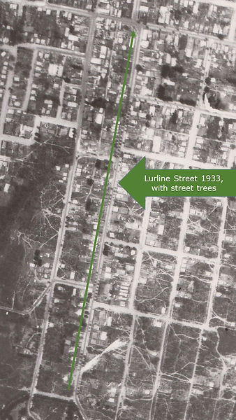 Lurline Street aerial 1933, with street trees