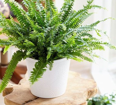Indoor Plants Help The Air in your Home