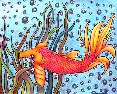 Ojos de Pescado (Fish Eyes).jpg
