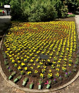 Indian Cultural Garden - 'Om' symbol