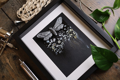 Large Black and White Death Head Moth