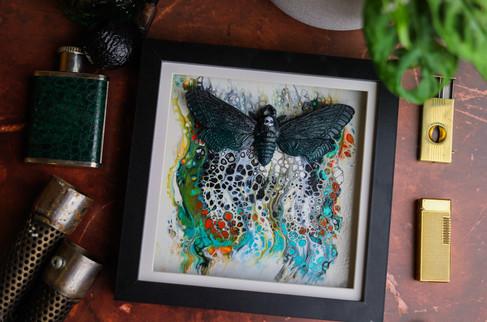 Autumn Death Head Hawk Moth