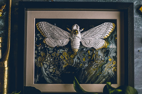 Large Gilded Death Head Moth