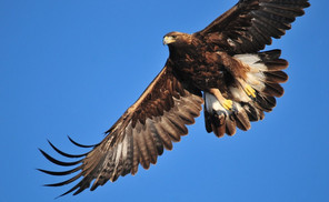 The Sign Of The Eight Eagles