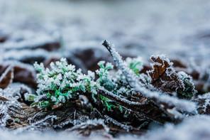 A Winter Season