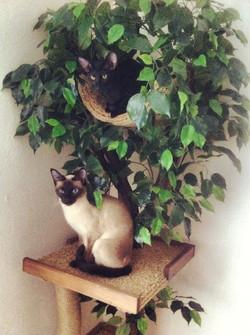 Кошки на дереве