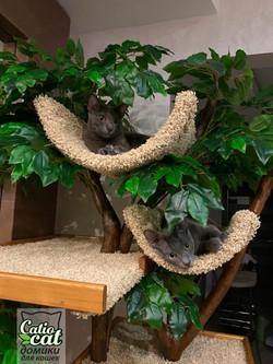 Дерево для кошки на заказ, Марина, Москва