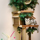 домик-для-кошки-Catiocat-3.jpg