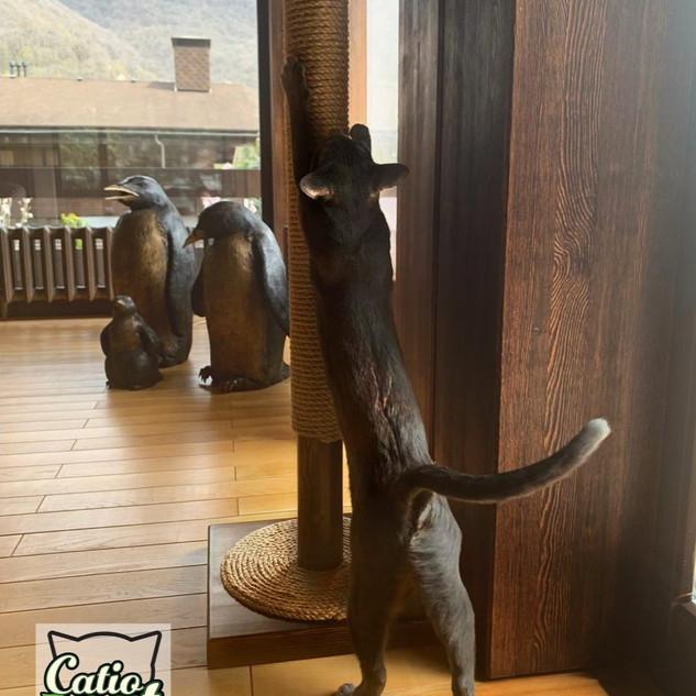Когтеточка для кошки.jpg