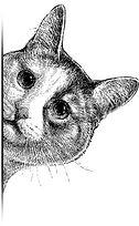 cat-peeping-450w-255850861ewewwetwt.jpg