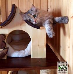 Домик для кошки Catcountry
