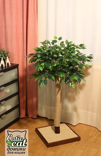 Когтеточка деревце