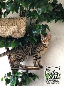 дерево для кошки.jpg