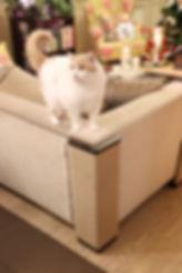 alt-когтеточка на диван.jpg