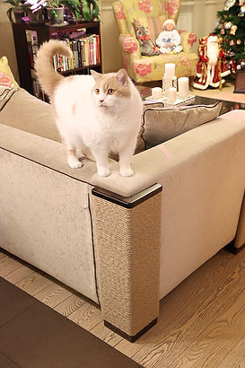 когтеточка на диван